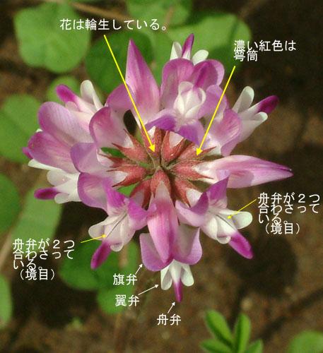ゲンゲ花つくり2.jpg