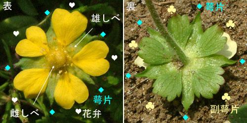 ヘビイチゴ花.jpg