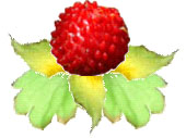 ヘビイチゴ作りタ.jpg