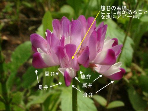 ゲンゲ花つくり1.jpg