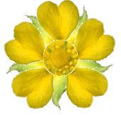 ヘビイチゴ作り花.jpg